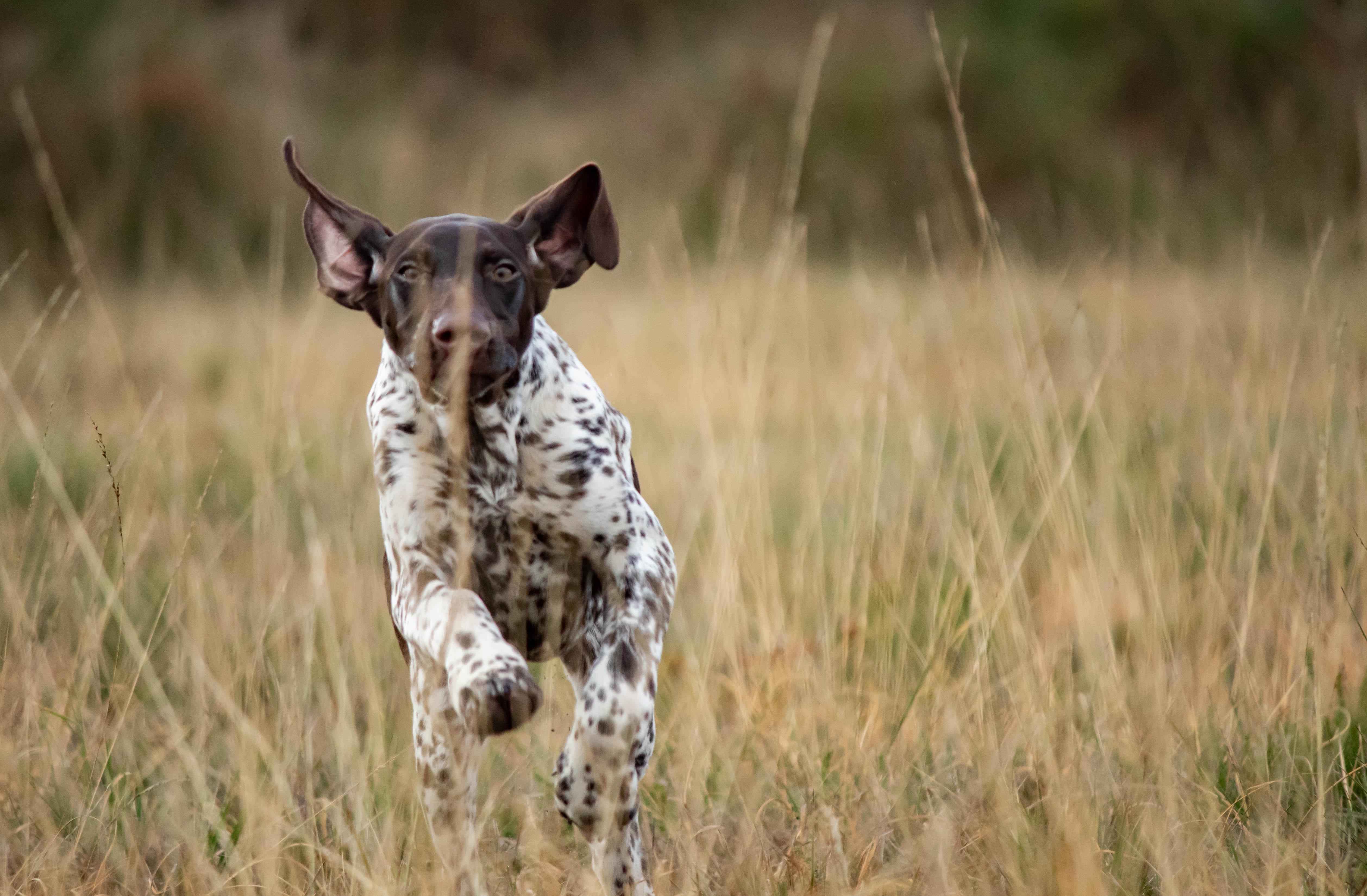 Pension canine à Mios en Gironde